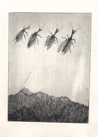 insectes alpins101
